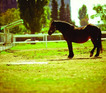 Laboratory for bacterial horses' disease diagnostics (EquiBAKlab)