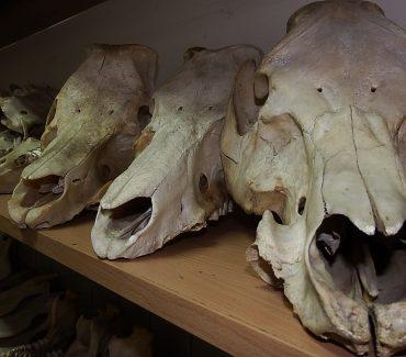Laboratoriji Zavoda za anatomiju, histologiju i embriologiju