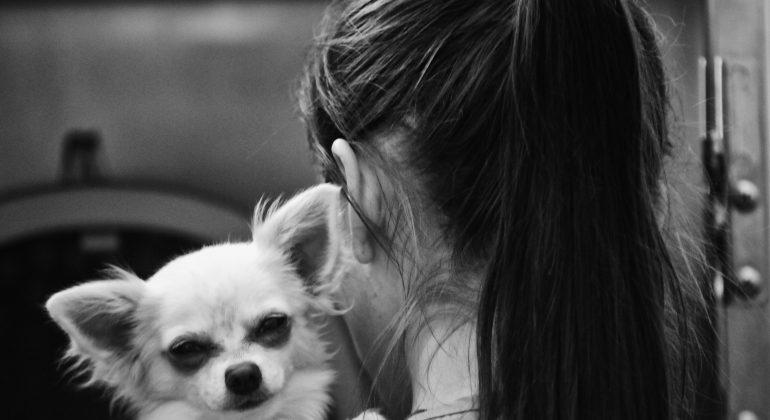 Istraživanje zdravlja kućnih ljubimaca iz COVID-19 pozitivnih kućanstava – poziv