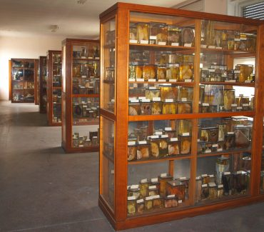 Muzej Zavoda za veterinarsku patologiju
