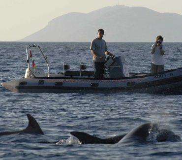 Istraživačka skupina za morske sisavce