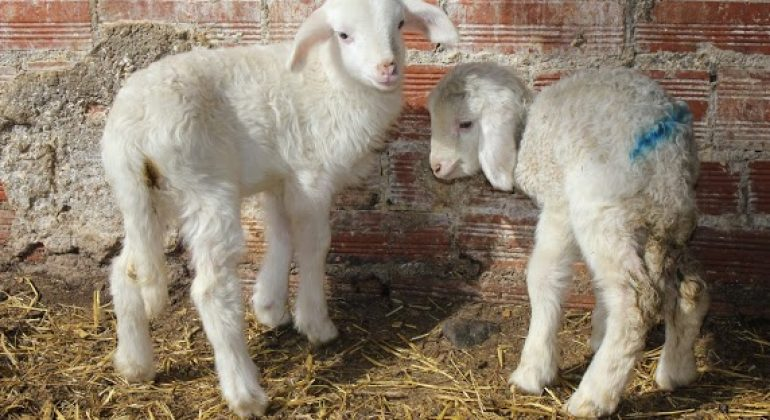 XXIV International Congress of the Mediterranean Federation for Health and Production of Ruminants