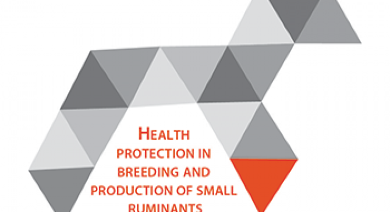 Health protection in breeding and production of small ruminants