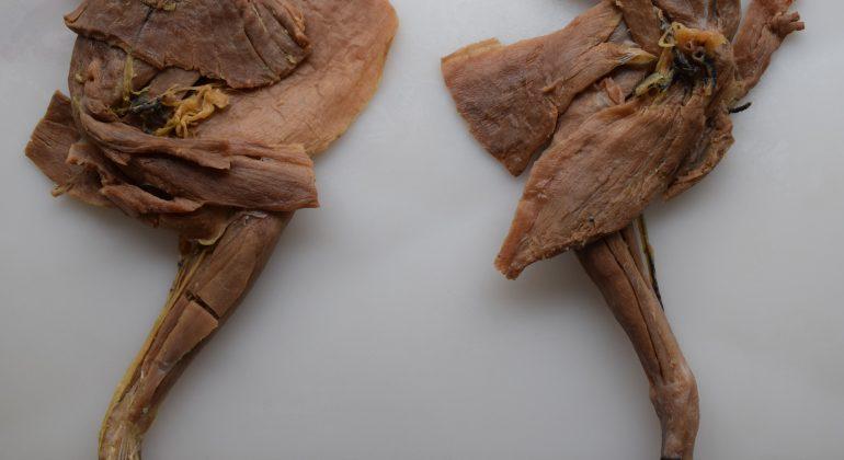 U sklopu HKO projekta polietilenglikolom impregnirani anatomski preparati za nastavu