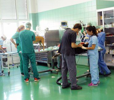"""Tribina """"Cjeloživotno obrazovanje – novosti u veterinarskoj kirurgiji"""""""