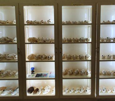 Izložbena zbirka – velike zvijeri Hrvatske