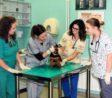 Upute Veterinarskoga fakulteta za brigu o kućnim ljubimcima tijekom epidemije