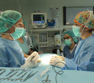Rad Sveučilišne veterinarske bolnice za vrijeme epidemije bolesti COVID-19