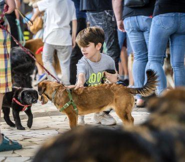 Istraživanje – Psi i mačke izlučuju virus u vrlo maloj količini i nisu izvor infekcije za ljude