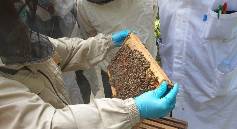 """Radionica """"Postavljanje sumnje na bolesti pčela i uzorkovanje na pčelinjaku"""""""