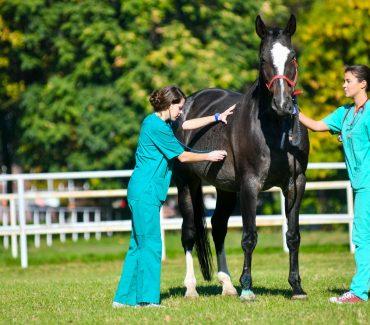 Što rade veterinari?