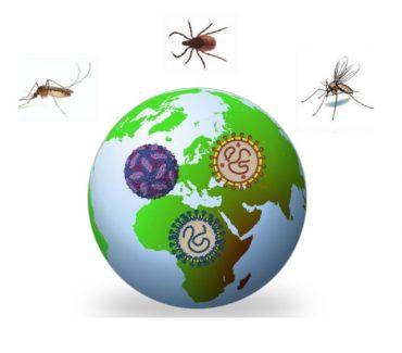 Simpozij Re(emergentni) arbovirusi u sjeni pandemije COVID-19