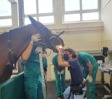 Nabavljena oprema za stomatologiju u sklopu HKO projekta